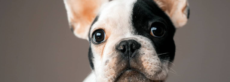 Dog Puppy Slider