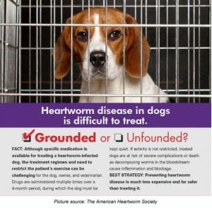 Grounded or unfounded heartworm disease in dogs explanation from the american heartworm society